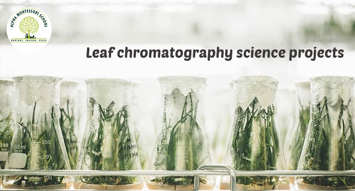 Leaf chromatography science projects