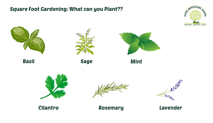 Herbs to Plant for Square Foot Gardening - Alpha Montessori