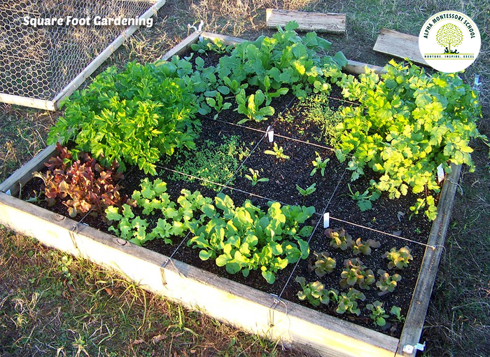Square Foot Gardening planting Guide - Alpha Montessori