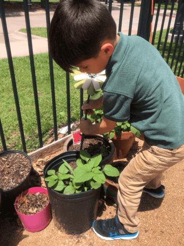 Gardening-activities-in-Alpha-Montessori-school